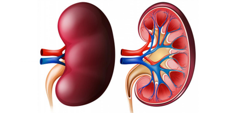 إنفوجراف.. تعرّف على أعراض اعتلال الكلى السكري وطرق الوقاية منه